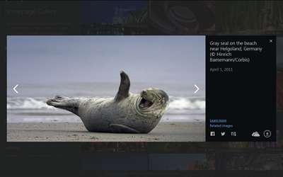 Wallpapers von Suchmaschine Bing als Download